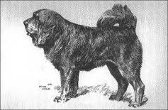 A.Wardle,1885