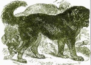 Hutchinson dog encyclopaedia