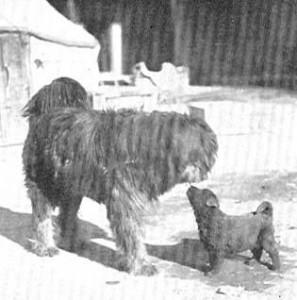 Sven Hedin, 1908, apso do-khyi