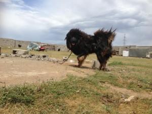 Gobi-Altay (ASAR)