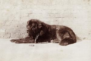 Bouth, 1855, fotoW.Bambridge