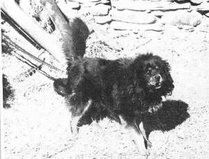 H.Harrer,1945, tibet